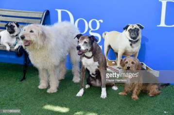 """CENTURY CITY, CA - AUGUST 05: Dogs are seen at the premiere of LD Entertainment's """"Dog Days"""" at Westfield Century City on August 5, 2018 in Century City, California. (Photo by Frazer Harrison/Getty Images)"""