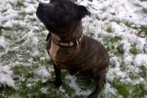 Jim More Than A Third Of Dogs Abandoned Last Year Still Looking For New Homes