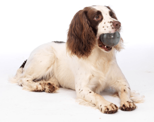 6. Dog and ball photo Merial Animal Health Launches Freedom to Move Campaign
