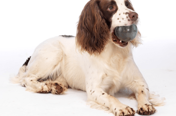 6. Dog and ball photo How to teach ANY dog the perfect STAY! (part 1)