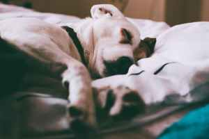 pexels photo 21028391 Almost Half Of Britain's Dog Owners Have Sleep Disturbed By Pet's Every Night