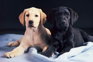 00016469 Goats Milk For Puppies