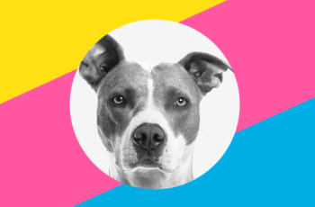 bright style Charity Issues Dog Weight Loss Challenge
