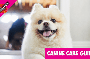 sponsored pink Dog Dental Care: An Expert Guide to Caring For Your Dog's Teeth