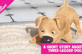three legged dog An Amazing Story About a Three-Legged Dog