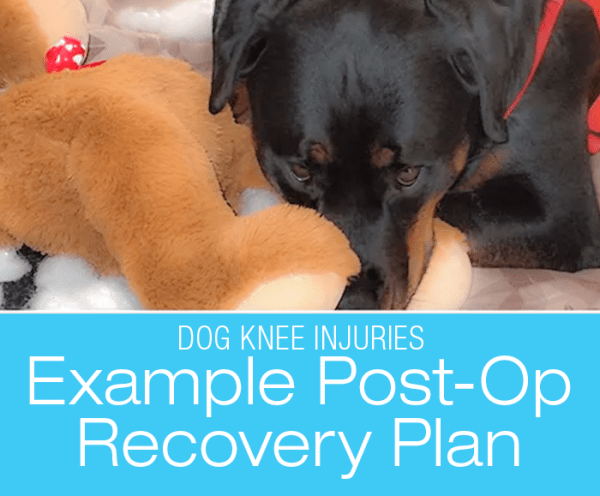 Talk To Me About Dog ACL/CCL Injuries: Post-Op