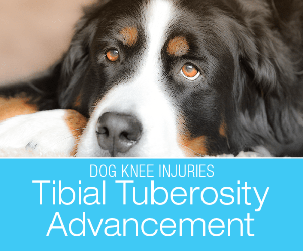 Tibial Tuberosity Advancement (TTA)
