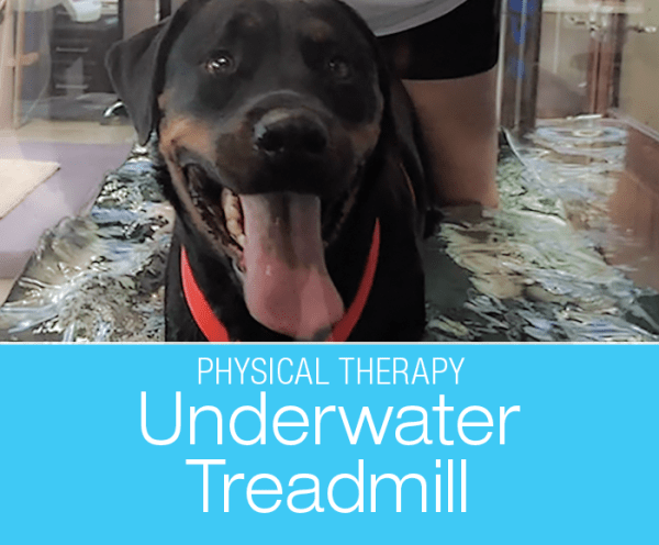 Physical Therapy for Canine Arthritis: Treadmills