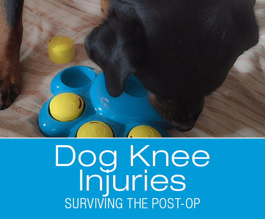 Dog Knee Injuries: Surviving the Post-Op