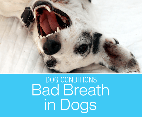 Bad Breath in Dogs: When Bad Breath Can Kill!