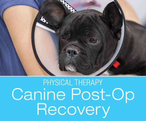 Canine Post-op Recovery: Don't Forget the Physical Therapy