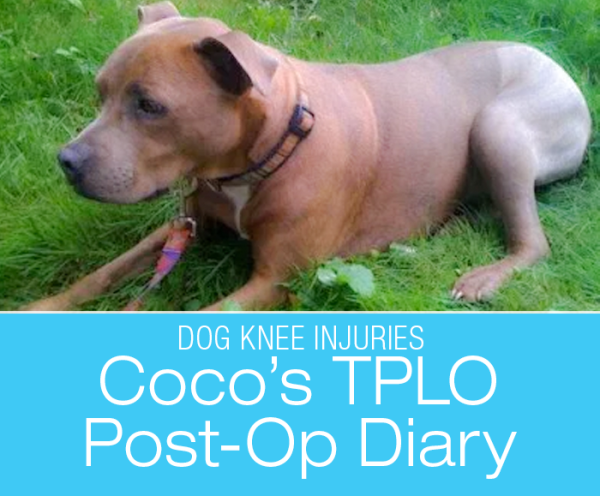 Canine TPLO Post-Op: Coco's Diary