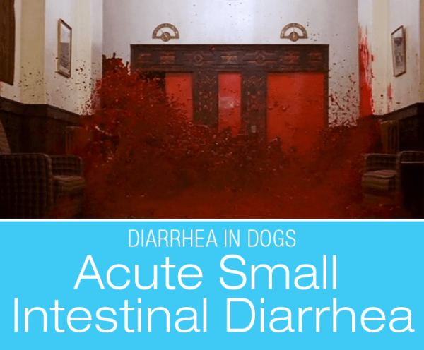 Acute Small Intestinal Diarrhea in Dogs: Stories from My Diary-rrhea (part II)