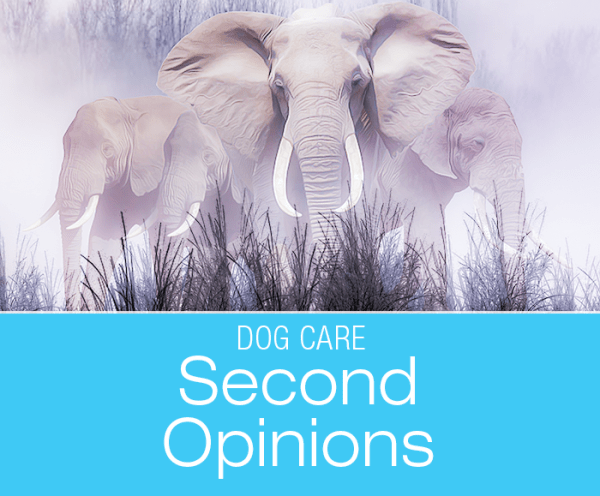 Seeking a Second Opinion for Your Dog