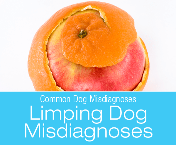 Common Limping Misdiagnoses in Dogs