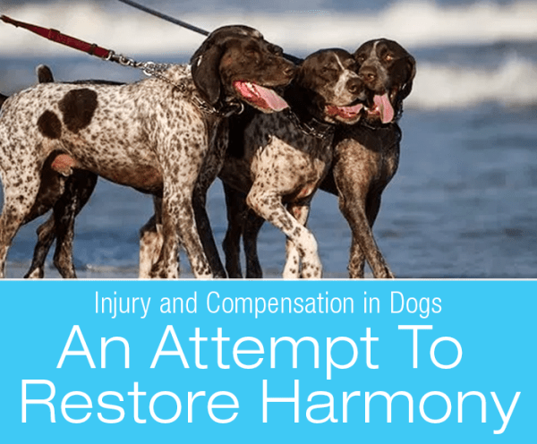 Injury and Compensation in Dogs: An Attempt To Restore Harmony