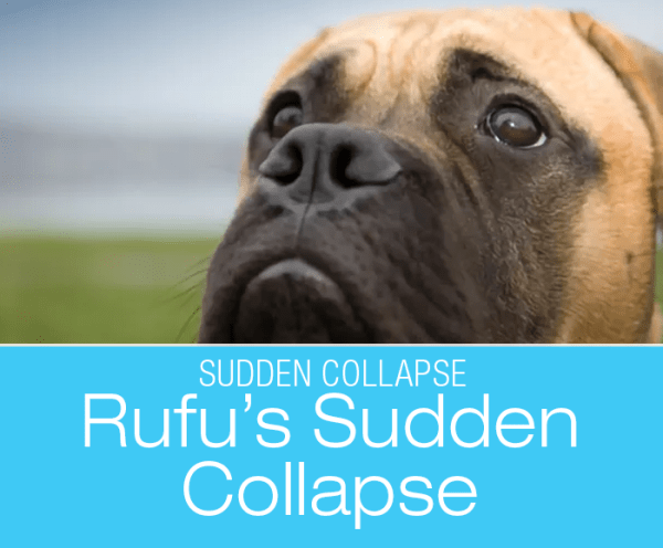 Sudden Collapse in a Dog: Spoil Your Dog Like There Is No Tomorrow