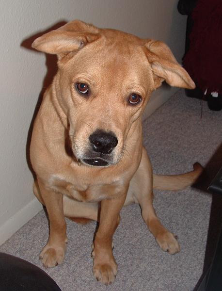 DIY Canine Massage: How Dog Massage Healed Nala's Mystery Limp