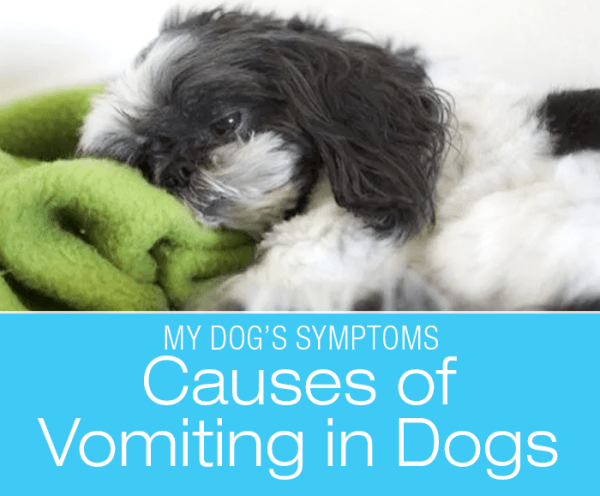 Causes of Vomiting in Dogs: Why Is My Dog Throwing Up?