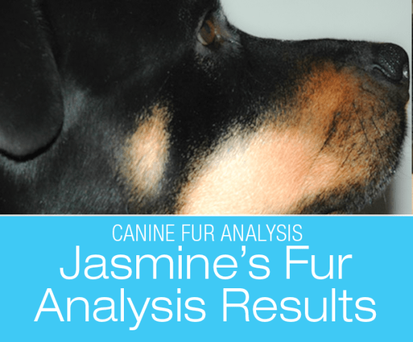 Fur Analysis for Dogs: Toxins? What Toxins? Jasmine's Results