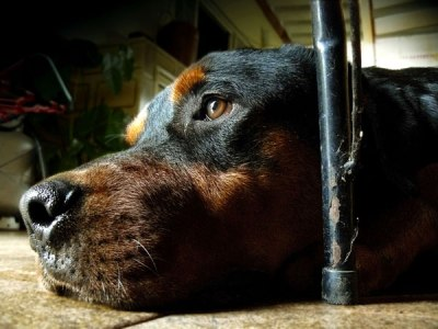 Chronic Versus Acute Pain In Dogs: What Is The Difference?