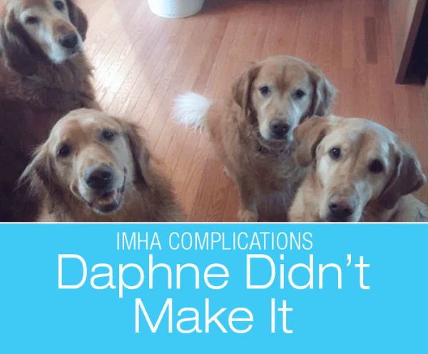 Diagnosis Confusion in a Dog: Liver Tumor? IMHA? Daphne's Story