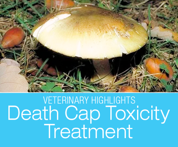 Death Cap Mushroom Poisoning: A Life-Saving Procedure? The death cap is one of the most toxic mushrooms. If your dog ingests even the tiniest bit, it is a life-threatening situation.