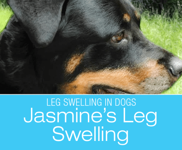 Canine Leg Swelling: Jasmine's Mysterious Swelling And Another Experience With VetLive
