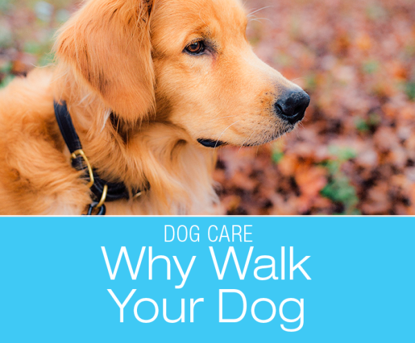 Why Walk Your Dog: It's Not Just Walking, It's Therapy!
