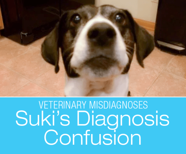 Canine Diagnosis Confusion: Suki Doesn't Have A Tumor And She Doesn't Have Cushing's—Suki's Story