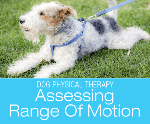 Assessing Range Of Motion in Dogs: It's A Matter Of Degree