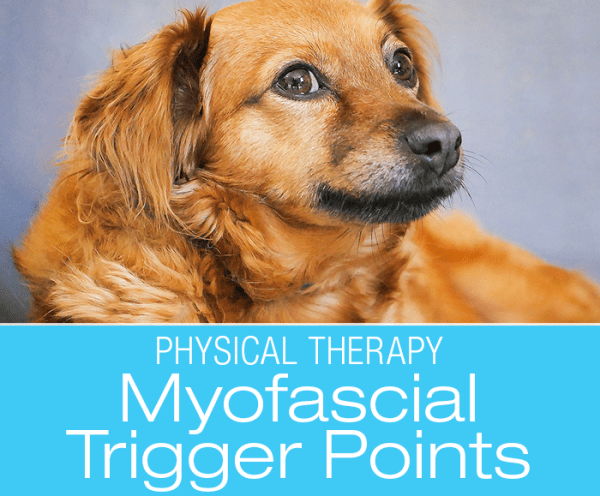 Canine Myofascial Trigger Points: Unraveling The Mystery Of Fascia and Treatment of Myofascial Trigger Points
