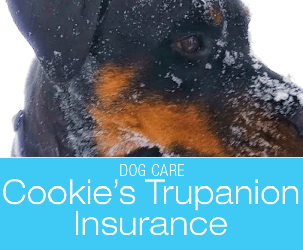 Sticking with Trupanion: Cookie Too Is Insured With Trupanion