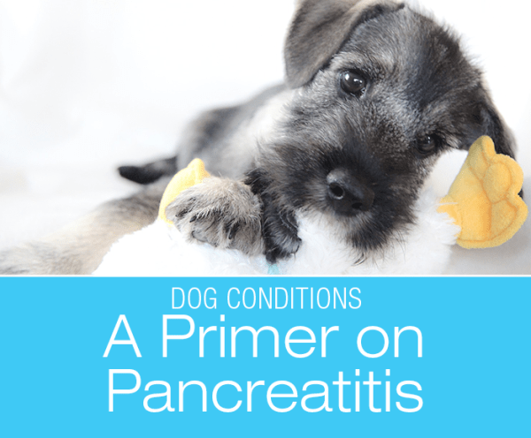 A Primer On Pancreatitis in Dogs
