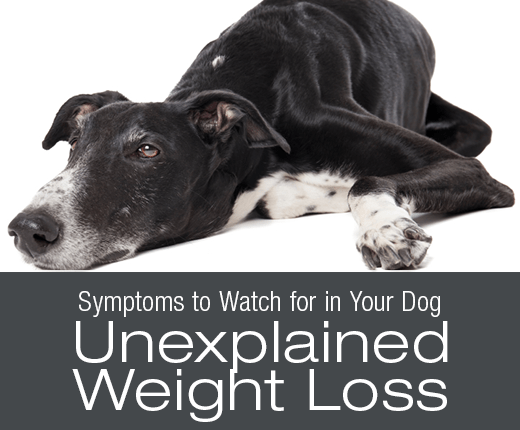 Symptoms To Watch For In Your Dog: Unexplained Weight Loss