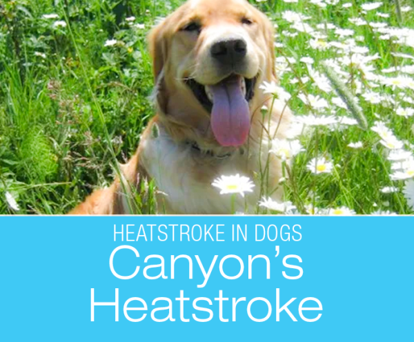 Heatstroke - See It Coming: Canyon's Story