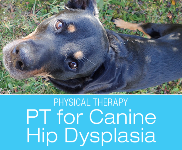 Physical Therapy for Hip Dysplasia: Tips and Techniques