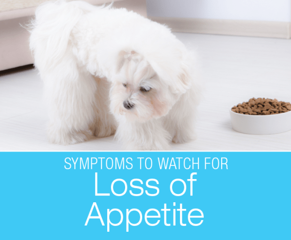 Loss of Appetite in Dogs: Why Did My Dog Stop Eating? Decreased appetite might reflect a life-threatening illness.
