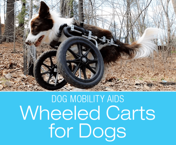 Canine Wheeled Carts: Mobility Aids - Wheelchairs for Dogs