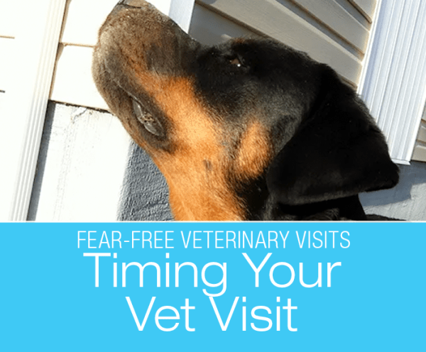 Fear-Free Veterinary Visits: The Stench of Fear—Is There Good and Bad Timing for Vet Visits?