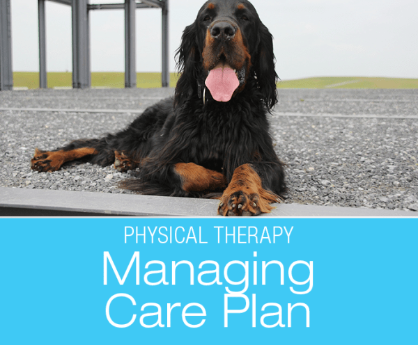 Managing Your Dog's Care Plan