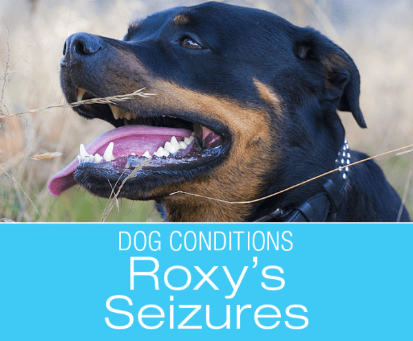 "Seizures in Dogs: All From a Tooth Abscess? ""Help, Roxy Fell"""