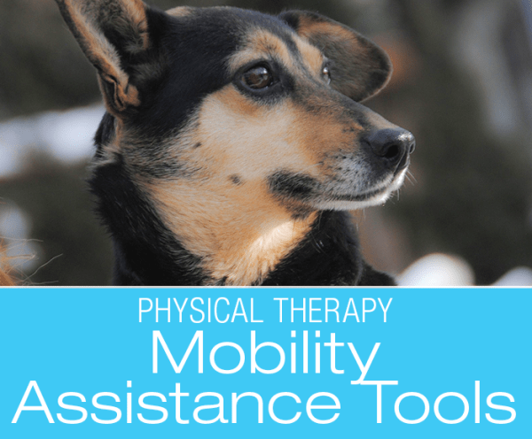 Dog Mobility Assistance Products