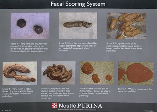 Dog Poop Consistency: Purina Scoring System