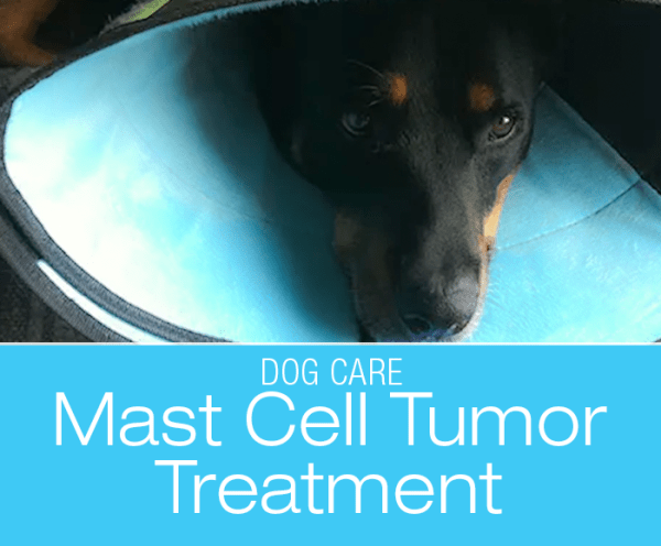 Mast Cell Tumor Treatment: JD's Mast Cell Tumor— Surgery and Pathology Report
