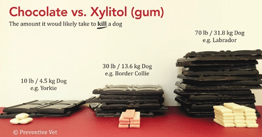 Xylitol, Xylitol, Xylitol: Know Where It Can Be Hiding