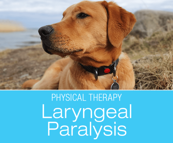 Canine Laryngeal Paralysis - GOLPP: Physical Therapy to Help Dogs with Laryngeal Paralysis