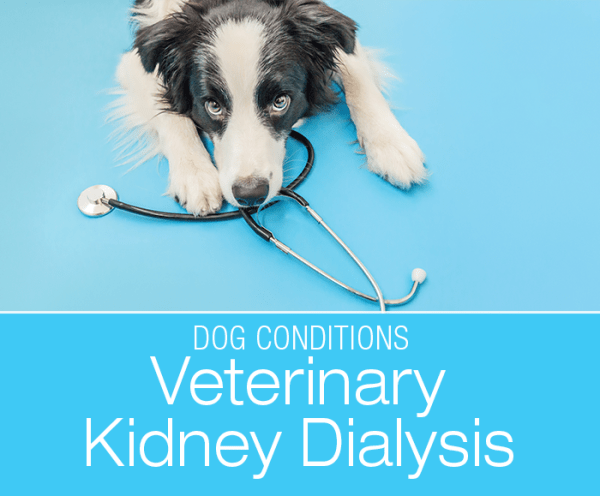 Veterinary Kidney Dialysis