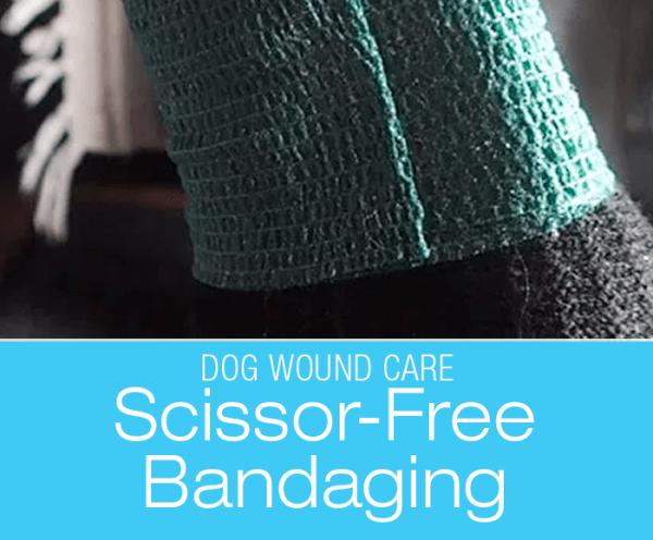 Dog Wound Care: Scissor-Free Bandaging