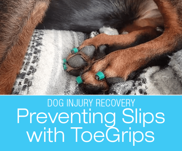Facilitating Dog Injury Recovery: Cookie's Recovery from Iliopsoas Injury—Preventing Slips with ToeGrips